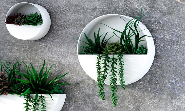 Decoración de plantas para cocinas